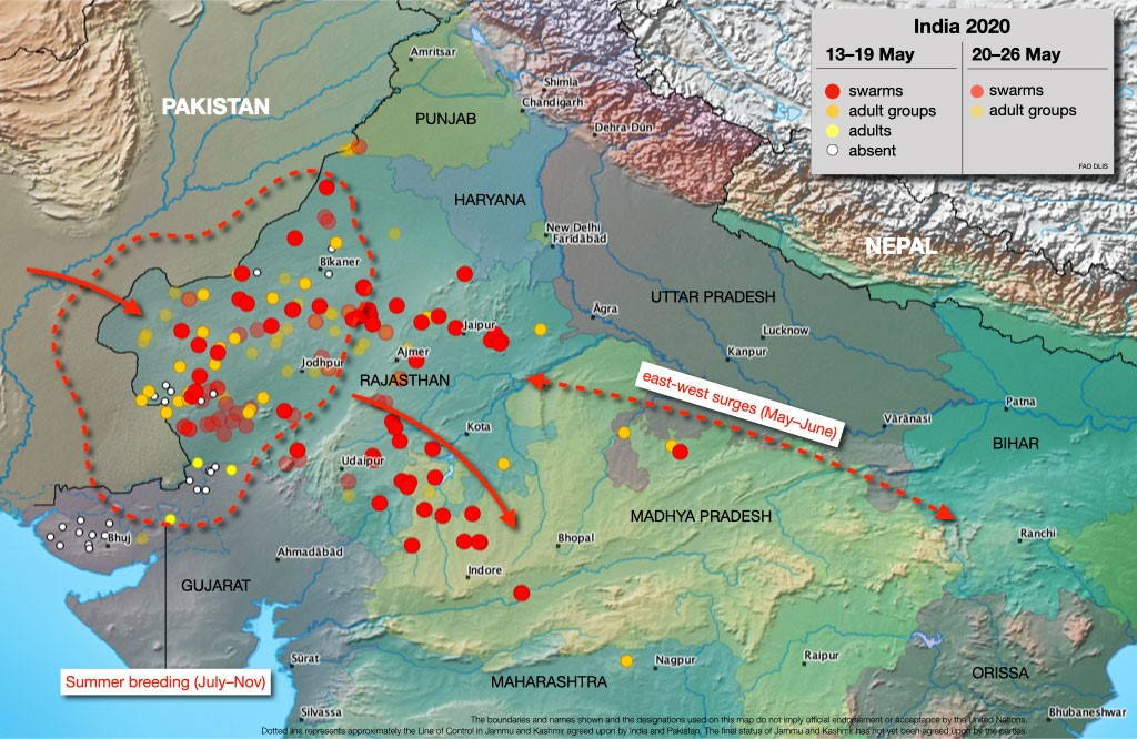 Pic from the FAO Locust Watch website showing the recent locust activity in India