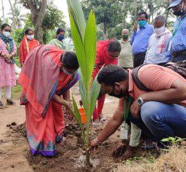 Chairman, Panchayat Samiti, Satyabadi block, Puri (left) planting coconut on the occasion of World Coconut Day. Photo: ICRISAT