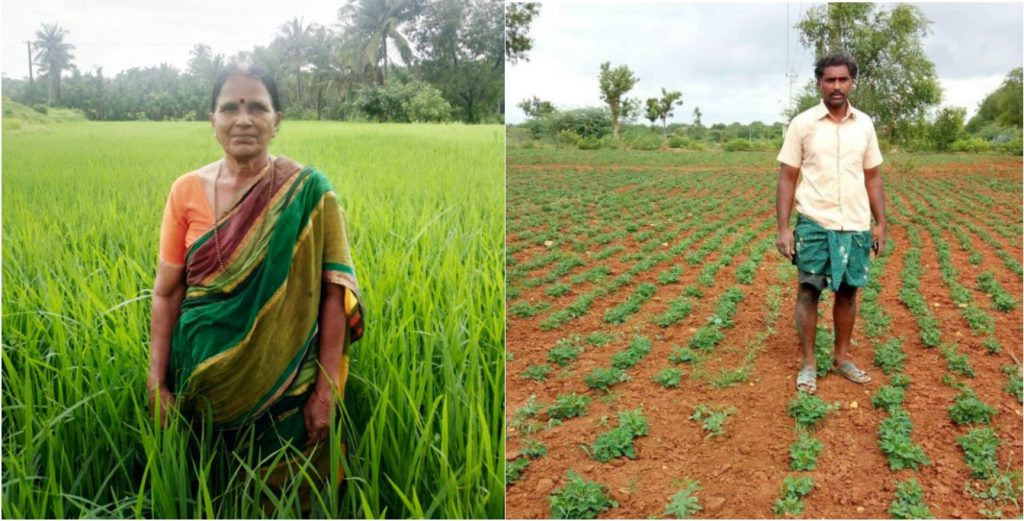 Beneficiaries of Bhoosamrudhi produce Direct Seeded Rice (left) and groundnut (right).