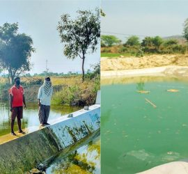 """Water conservation structures in Anantapuramu: A check dam (L) constructed in Kondampalle village, Anantapuramu, during 2017 has led to increase in groundwater levels that benefits a newly constructed pond (R) in Ramachandra Reddy's farm, providing sufficient water to irrigate a second crop. The check dam constructed in 2017 through the project has ensured that groundwater is available at a depth of 3 meters. Before the project, even water for drinking purposes was not available, and groundwater was available only at about 183 meters during the dry seasons,"""" he says. Photo: Arun Seshadri, ICRISAT"""