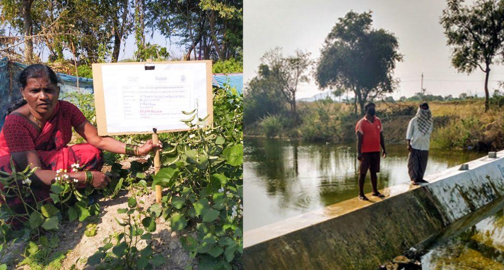 Left: Sattyamma in her nutri-garden in Peddagudem village, Wanaparthy. Photo: BISLD/Samatha/ICRISAT Right: An old check dam constructed in Kondampalle village in 2017. Photo: Samatha/ICRISAT